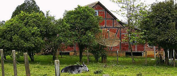pomerode casa e vaca
