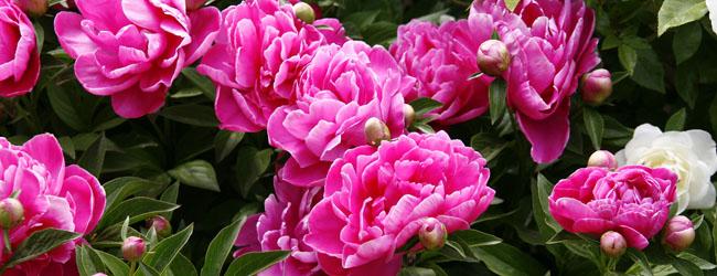 Concha flores