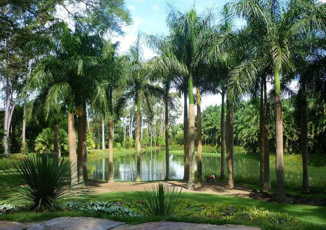 jardins plantas rasteiras:INHOTIM