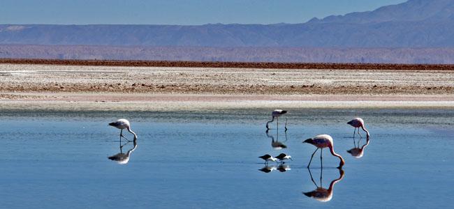 Deserto Atacama Chile - Salar Flamingos