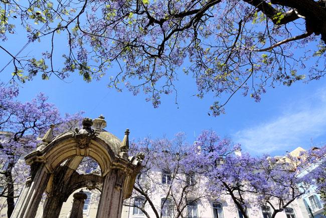 Largo do Carmo Lisboa Portugal