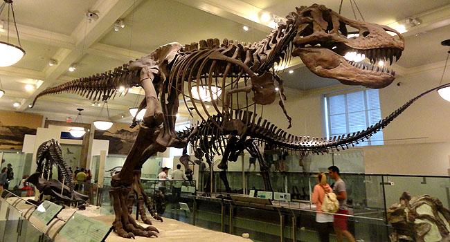 Nova York Museu Historia Natural
