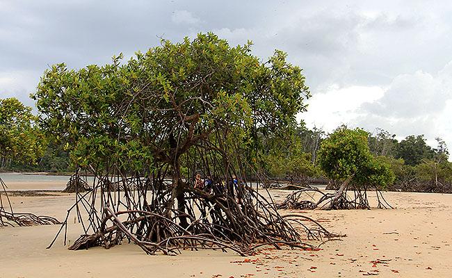 Fazenda Sao Jeronimo Ilha de Marajo Goiabal