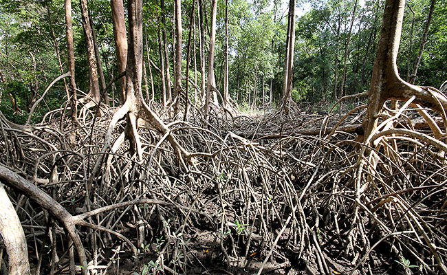 Fazenda Sao Jeronimo Ilha de Marajo Mangue