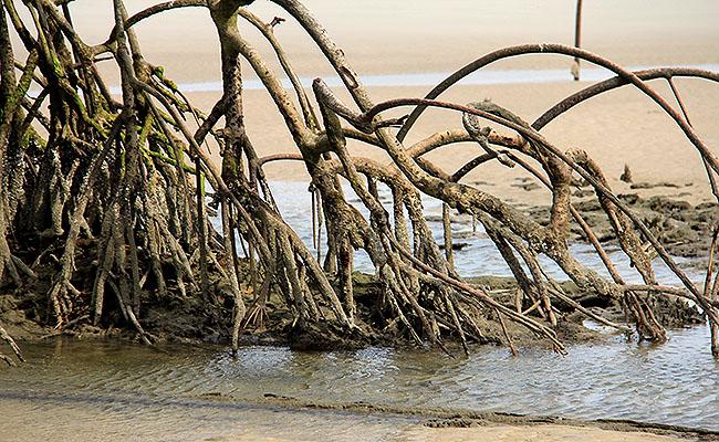 Fazenda Sao Jeronimo Ilha de Marajo Praia do Goiabal