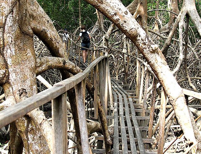 Fazenda Sao Jeronimo Ilha de Marajo Trilha Tour