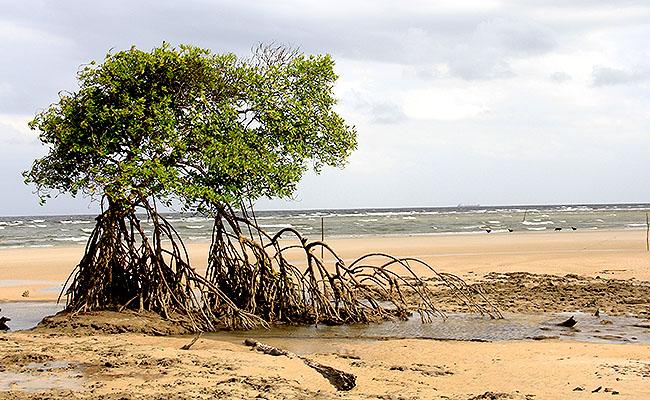 Ilha de Marajo Fazenda Sao Jeronimo