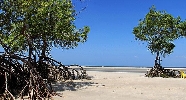 Ilha de Marajo Barra Velha Soure