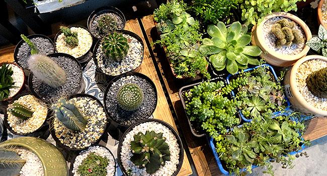 Mercadoteca plantas