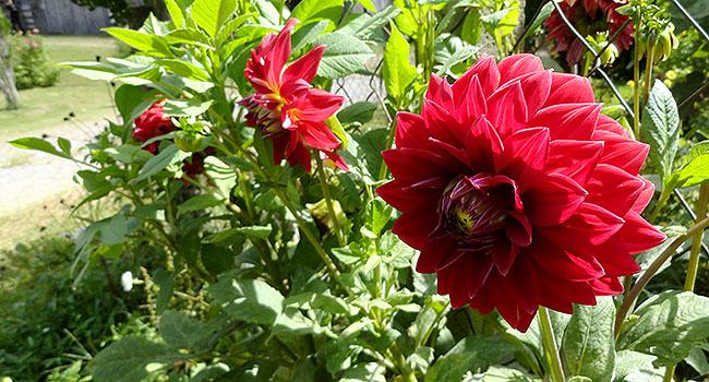 Vinicola Familia Fardo Flores