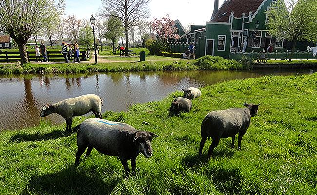 Zaanse Schans Holanda paisagem
