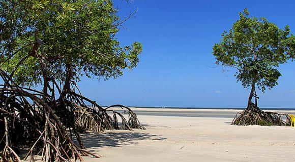 Novo voo comercial inaugura a rota Belém-Soure, na Ilha de Marajó