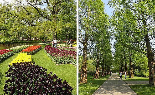 como-visitar-o-keukenhof-jardim-de-tulipas-holanda-caminhos-e-fotos