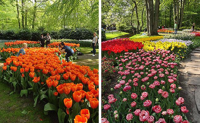 como-visitar-o-keukenhof-jardim-de-tulipas-holanda-caminhos