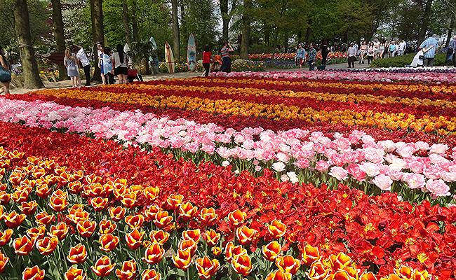 como-visitar-o-keukenhof-jardim-de-tulipas-holanda-flores-e-pessoas