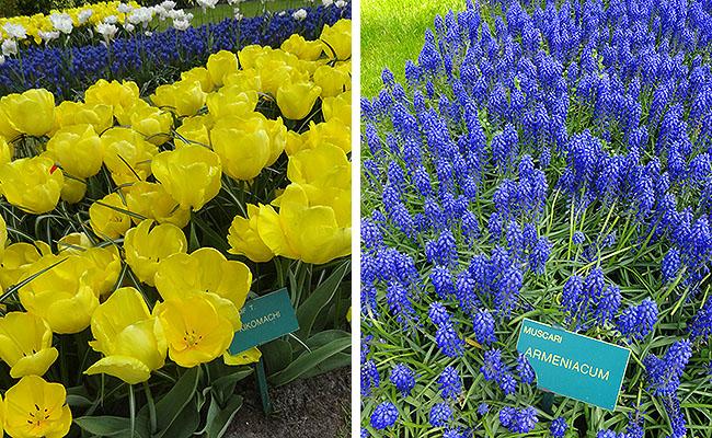 como-visitar-o-keukenhof-jardim-de-tulipas-holanda-flores