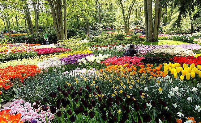 como-visitar-o-keukenhof-jardim-de-tulipas-holanda-geral-01