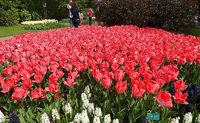 como-visitar-o-keukenhof-jardim-de-tulipas-holanda-geral-2