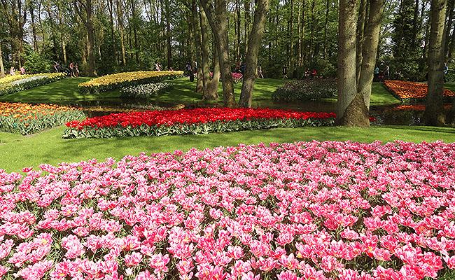 como-visitar-o-keukenhof-jardim-de-tulipas-holanda-geral