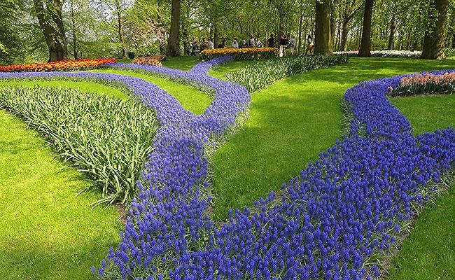 como-visitar-o-keukenhof-jardim-de-tulipas-holanda-jacinto