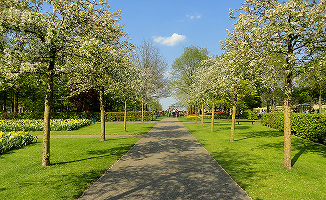 como-visitar-o-keukenhof-jardim-de-tulipas-holanda-jardins-verdes