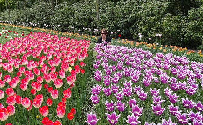como-visitar-o-keukenhof-jardim-de-tulipas-holanda-selfie-3