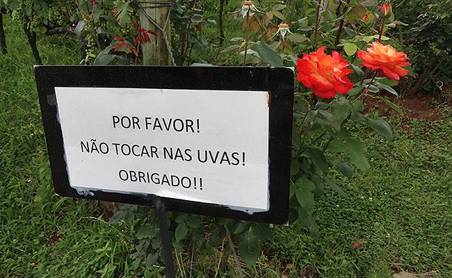 Vinicola Ravanello Gramado - Placas