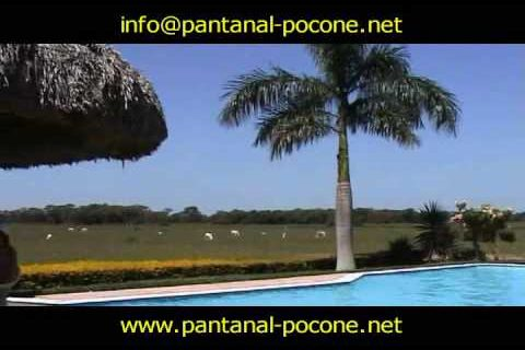 Férias de julho: safári no pantanal