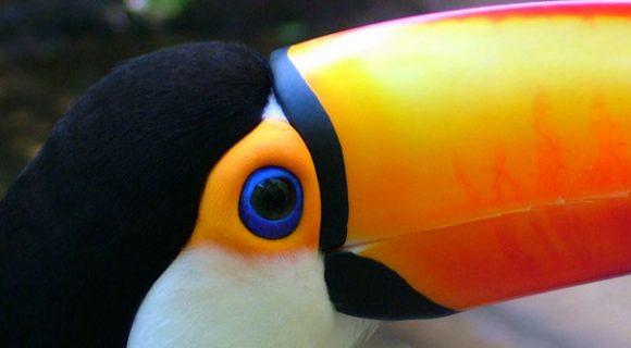 Foz do Iguaçu: Parque das Aves